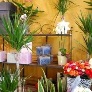 L'arrosoir du Prieuré - Nos plantes